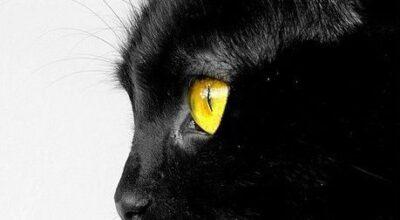 Letture Estive_ Alla scoperta del genere Noir